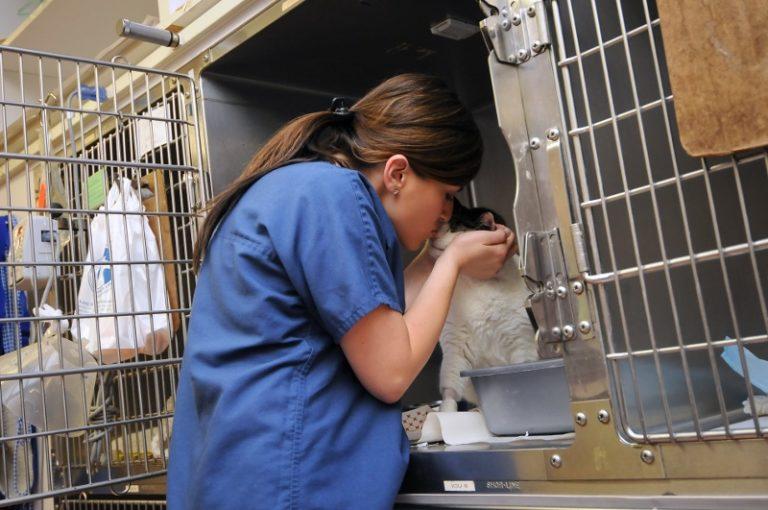 vet comforting a cat