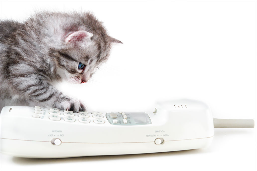 Animal Hospital in Plainview: Kitten Examines Old House Phone